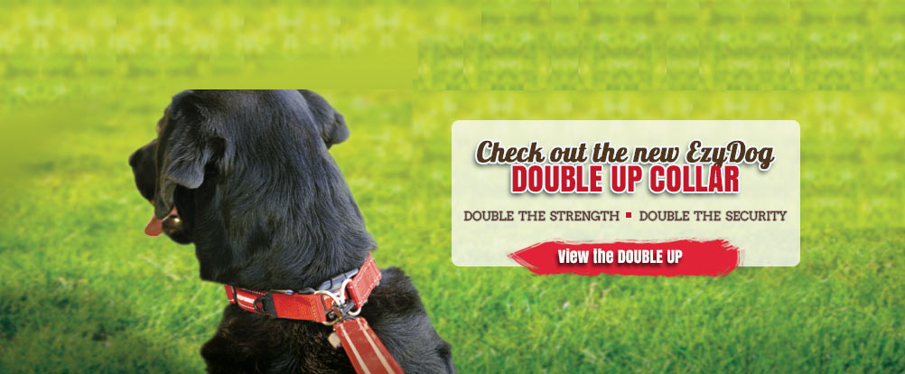 Double the Strength. Double the Security. Try the new EzyDog Double Up Collar.