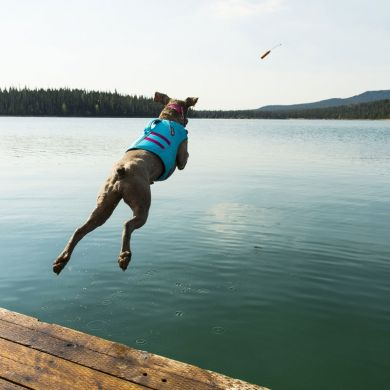 thumb_Ruffwear-Float-Coat-Dock-Diving_adaptiveResize_390_390.jpg