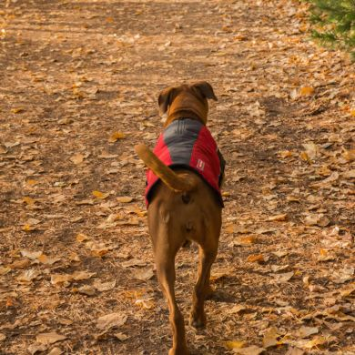 thumb_ezydog-element-dog-coat-annie_adaptiveResize_390_390.jpg