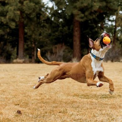 thumb_ruffwear-huckama-dog-toy-boxer_adaptiveResize_390_390.jpg
