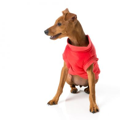 thumb_fuzzyard-hoodie-red-dog-front_adaptiveResize_390_390.jpg