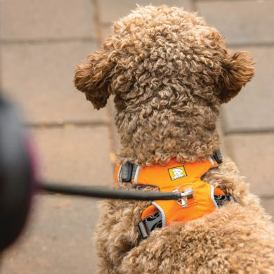 thumb_ruffwear-front-range-harness-back-curly_adaptiveResize_390_390.jpg