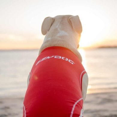 thumb_ezydog-dog-rashie-sun-protection-back_adaptiveResize_390_390.jpg