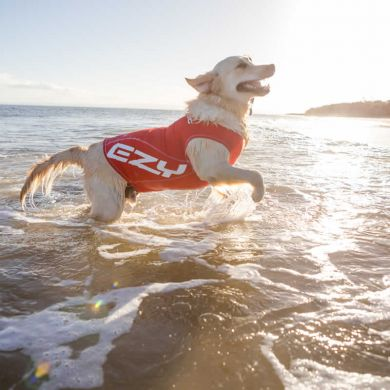 thumb_ezydog-dog-rashie-sun-protection-water_adaptiveResize_390_390.jpg