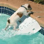 skamper-ramp-dog-pool-ramp-exit.jpg