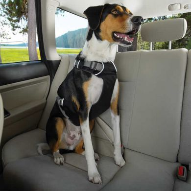 thumb_ruffwear-load-up-harness-front_adaptiveResize_390_390.jpg