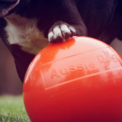 thumb_aussie-dog-staffie-ball-paw_adaptiveResize_390_390.jpg