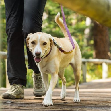 thumb_Ruffwear-Frisco-Leather-Leash-Walking_adaptiveResize_390_390.jpg