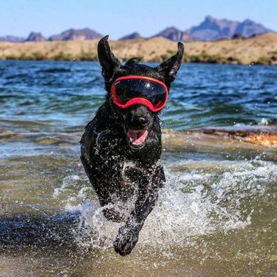thumb_rex-specs-dog-goggles-working_adaptiveResize_390_390.jpg