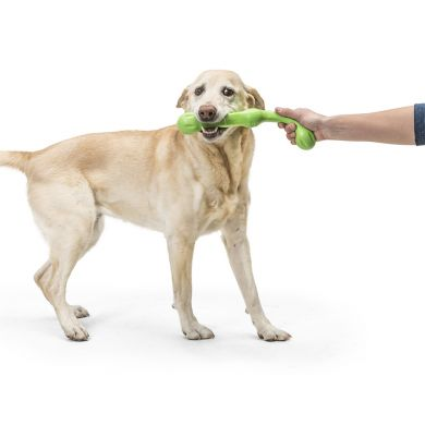 thumb_ZWIG_JUNGLE_YELLOW LAB_TUGGING_1_adaptiveResize_390_390.JPG