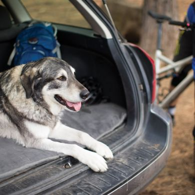 thumb_ruffwear-mt-bachelor-pad-car_adaptiveResize_390_390.jpg