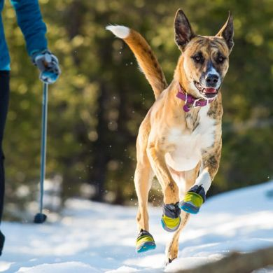 thumb_Ruffwear-Polar-Trex-Dog-Boots-Running_adaptiveResize_390_390.jpg